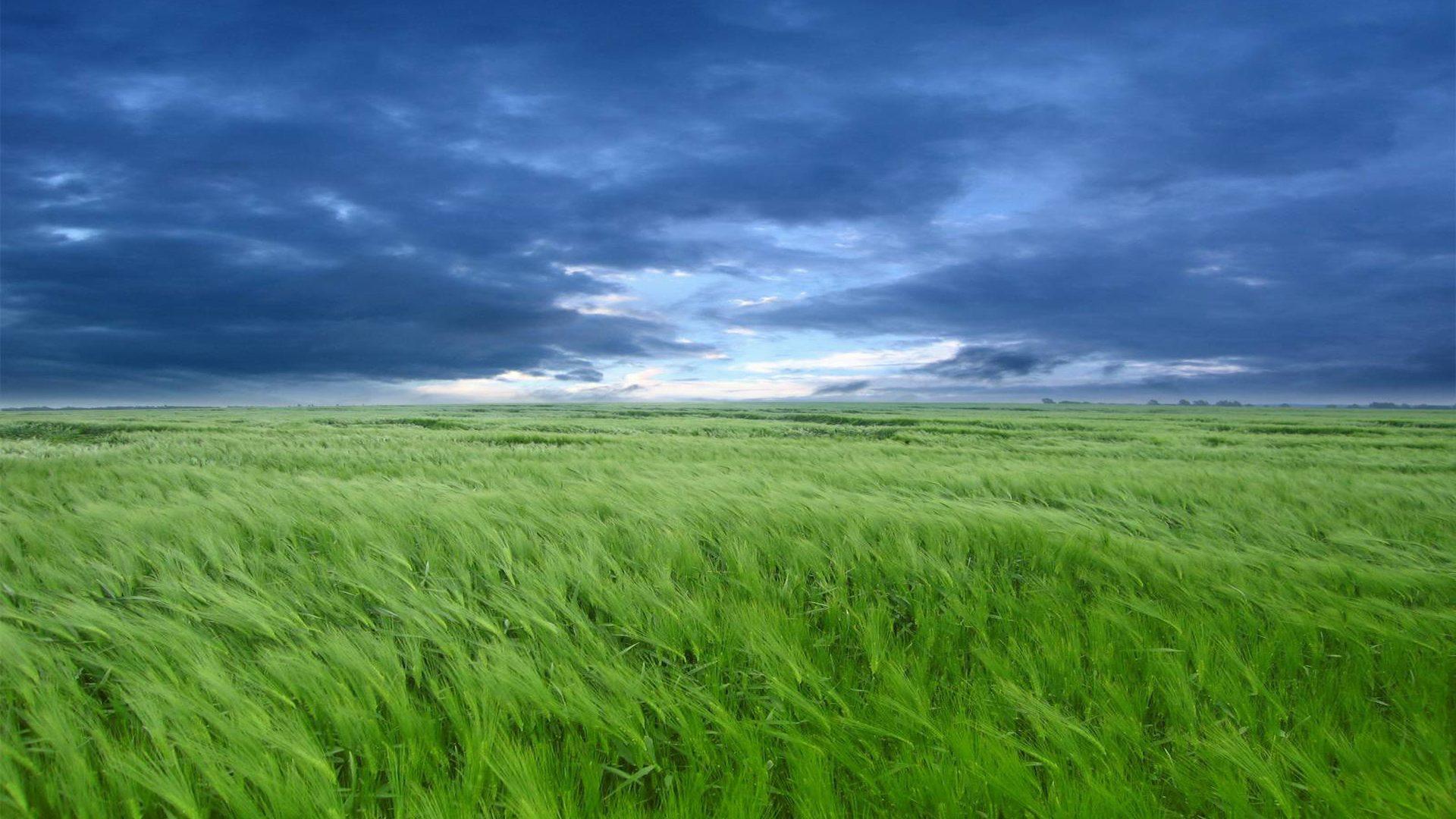 ¿Qué es la nube verde?
