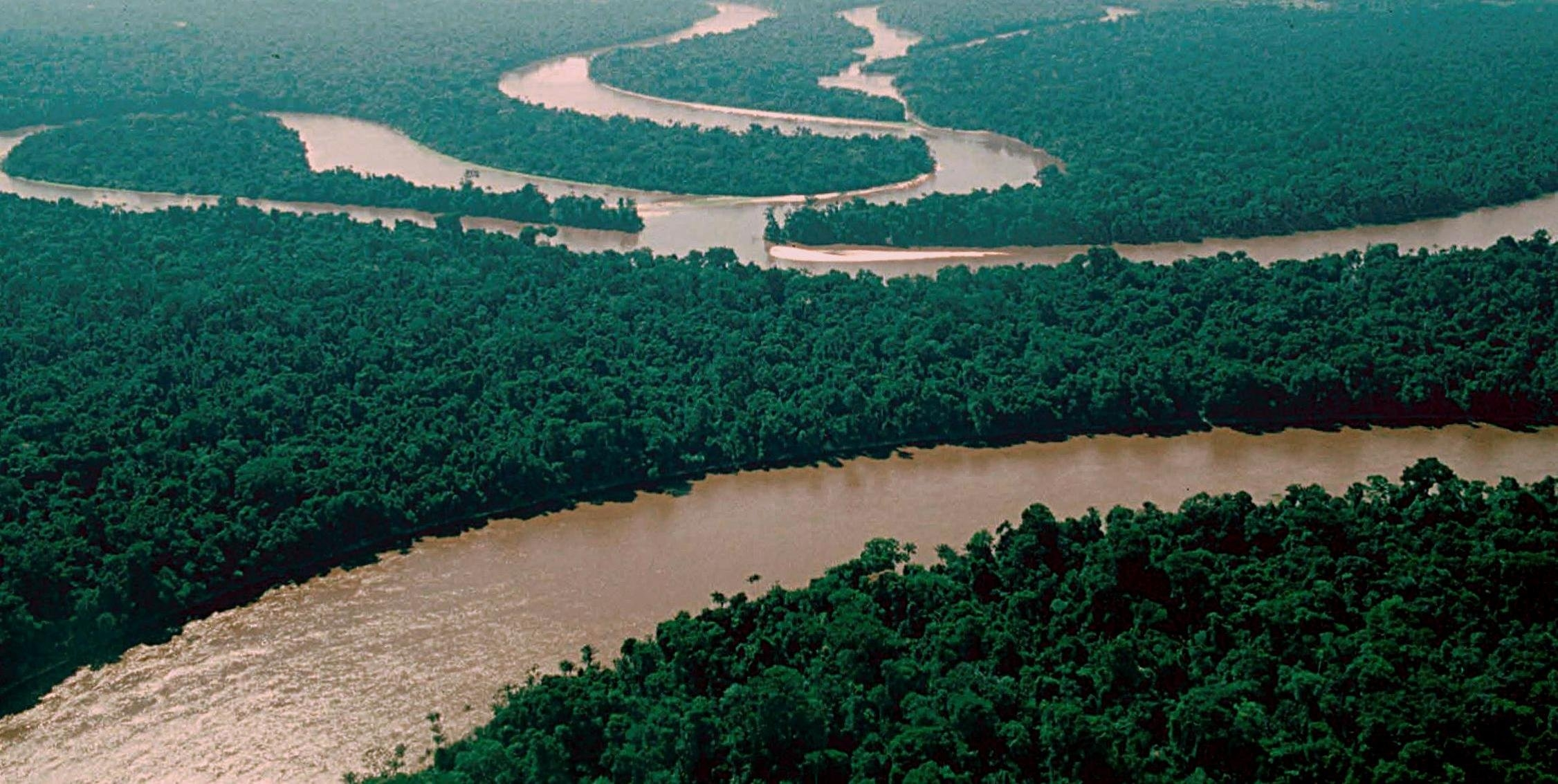 Microsoft ayuda a proteger la selva amazónica con su proyecto de IA